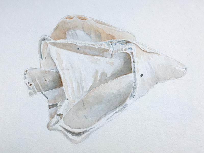 Shell Sketch (Watercolor) watercolor sketch illustration