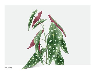 Leaf 6 polka dot begonia nature floral painting illustration botanical green plant leaf