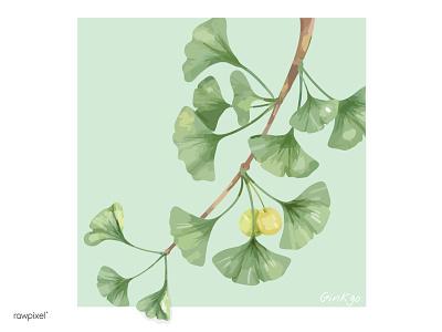 Ginkgo digital painting green nature leaves japan illustration ginkgo