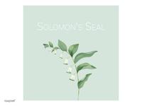 Solomon S Seal
