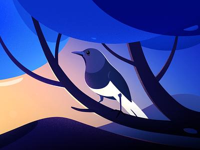 Magpie-robin kerala birds magpie-robin sunset tree hill blue evening vector light landscape nature illustrations little bird bird illustration