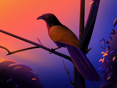 Greater coucal tree vector nature illustrations light project kerala india colour blue birds evening landscape illustrator illustraion coucal