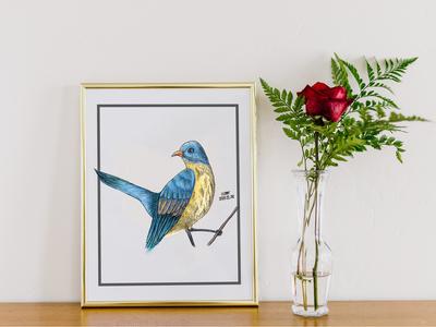 bird-临摹