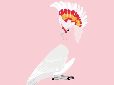 Major Mitchell's cockatoo