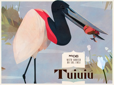 Birds — Jabiru bird birds brazil drawing illustration painting poster vintage