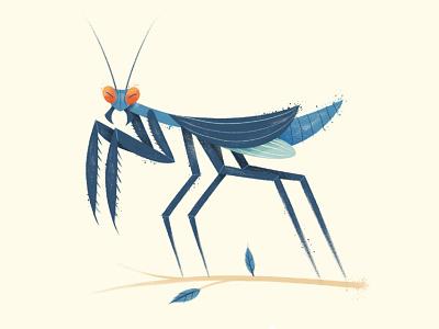 Praying Mantis drawn texture illustration bug insect mantis