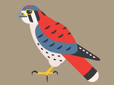 American Kestrel hawkseason sparrowhawk kestrel americankestrel falcon illustration wip vector wildlife raptor nature hawk illustrator bird illustration bird
