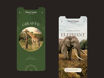 Mara Camp Safari Travel website mobile minimal website ux icon typography app design slider tours kenya africa mobile uiux elephant logo branding graphic design safari travel ui