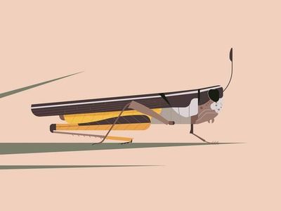 Hello Dribbble! harmony desaturated minimal realism minimalist minimal grass insects insect nature grasshopper illustration illustrations