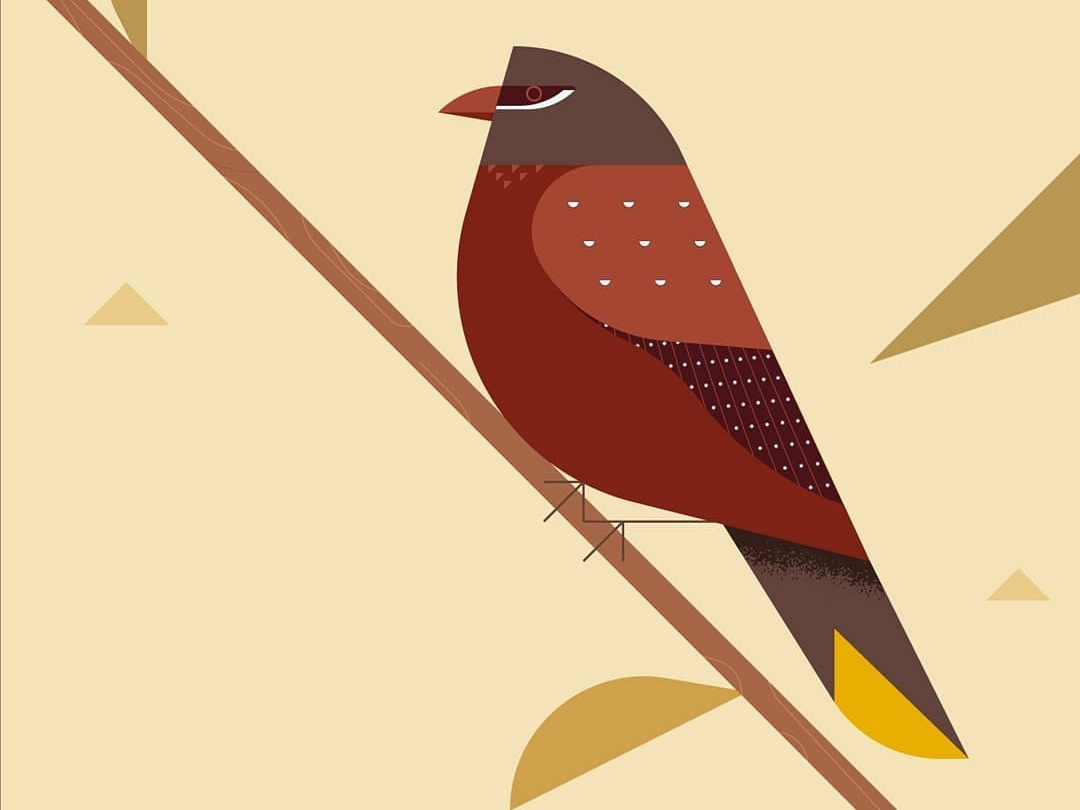 Strawberry Finch (Red avadavat) Illustration flat bird finch flat illustration finch illustration finch bird strawberry finch asian bird animal art parrot minimal realism flat illlustration animal flat bird illustration bird illustration finch bids