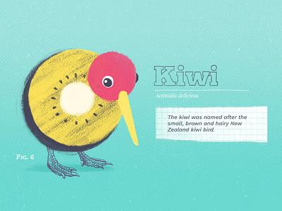 Kiwi kiwifruit kiwi graphic color design drawing collage colors illustration