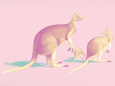 Pop kangaroos