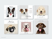 Pet care banner template vectors collection