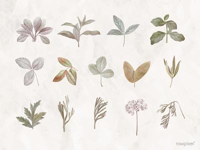 Foliage design elements design illustration floral