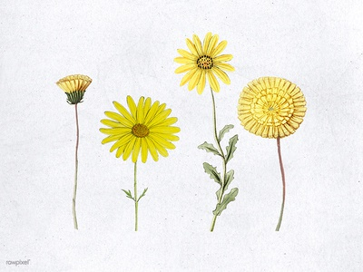 Various hand drawn yellow flower flowers yellow color
