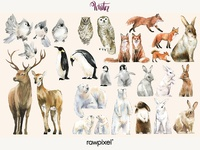 Winter Animals Vector Set