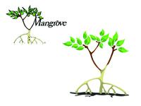 Mangrove | Logo Redesign