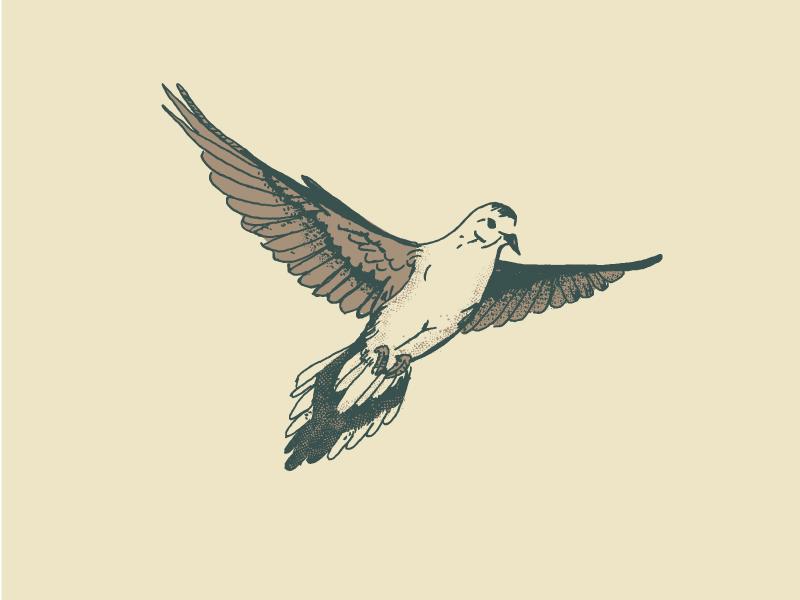 Mourning Dove outdoors hunting drawn hand flight bird dove