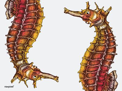Seahorse seahorse vintageillustration graphic illustration colorpencil drawing