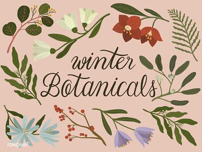 Winter Botanicals botanical illustration flowers illustration flowers procreate vintage tropical ipadpro calligraphy vintageillustration graphic drawing illustration