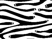 pattern - zebra skin