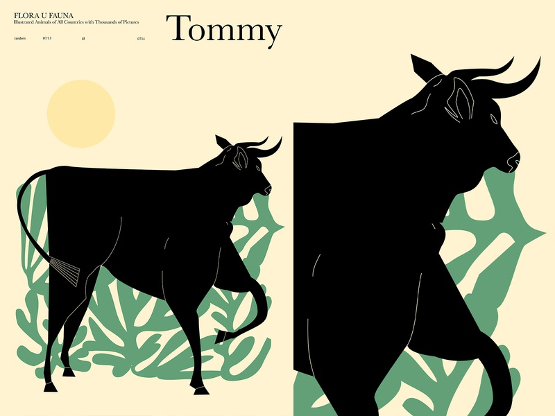 Tommy the Bull bull illustration bull animal illustration animal poster a day poster art lines poster laconic illustration composition abstract minimal