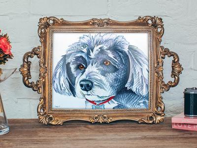 Schnauzer Pet Portrait