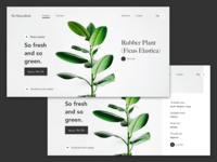 So-Succulent Landing Page