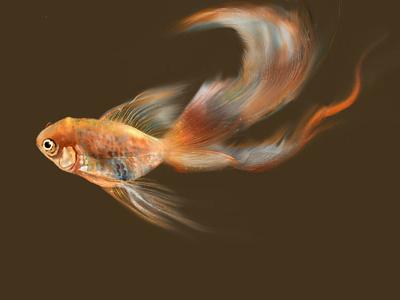 gold fish wacom photoshop drawings