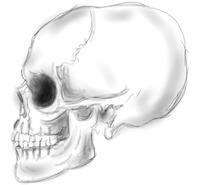 Skull Side Quick