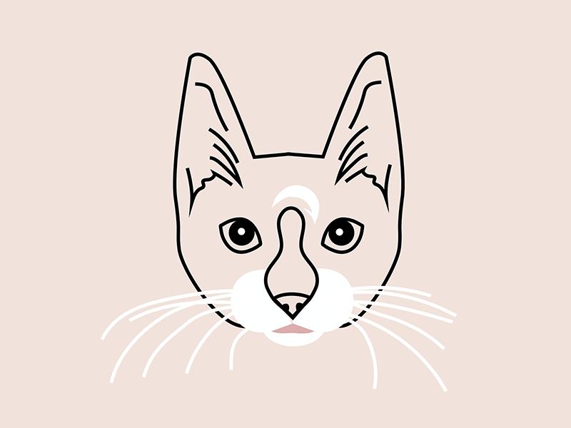 Pablo icon animal illustration cat