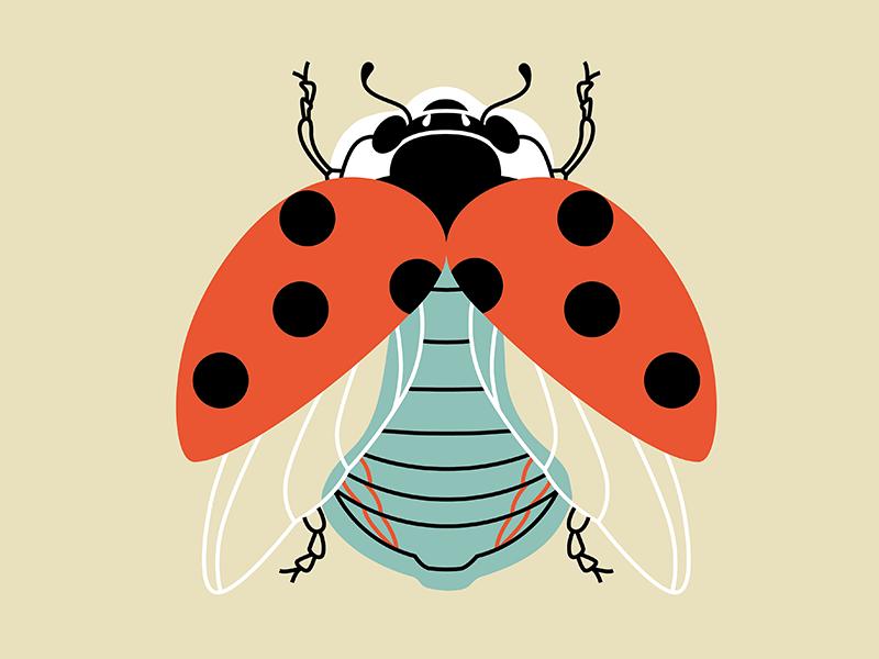 Ladybug vector icon illustration spring ladybug