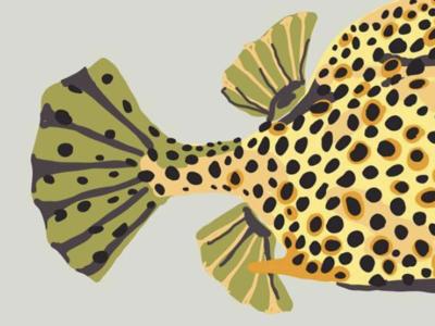 Fish Butt color procreate drawing digital ipad sketchy illustration fish