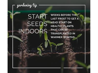 Garden tips design layout illustration photography type