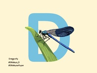 Dragon Fly - 36Days Of Type