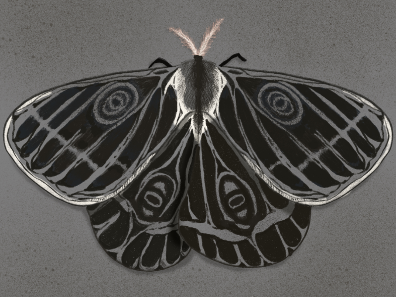 Metamorphosis painting artwork hand drawn procreate digital art brush nature