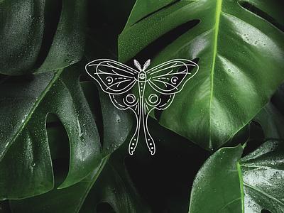 Luna Moth design illustrator adobe illustrator branding vector animal art logo design logo inspiration illustration moth