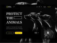 National Geographic Webdesign