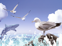 (Gulls)