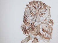 Angrier Owl
