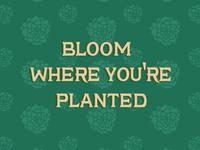 Slowly we unfurl as lotus flowers <3