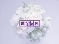 Tittot Logo Draft ii