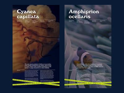 Oceana—layout exploration typography layout art direction ui design
