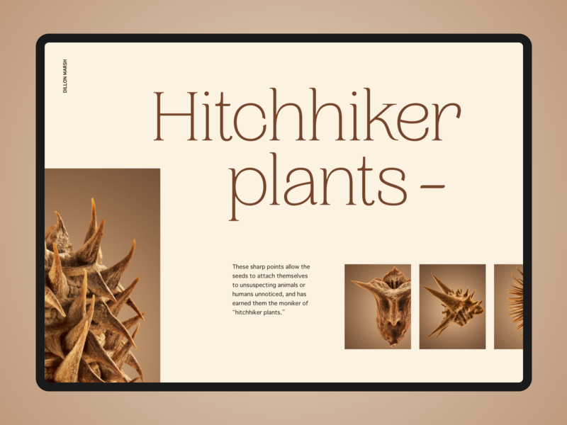 Hitchhiker Plants website typography layout art direction ui design