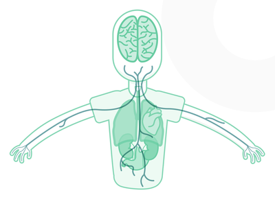 Sensie Science Illustrations nerves illustration brain body organs sensie