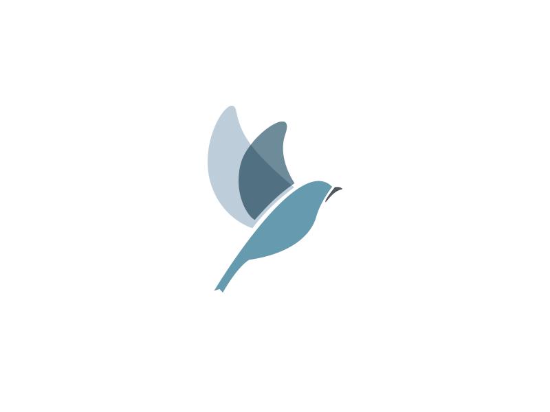 Bluebird bird bluebird