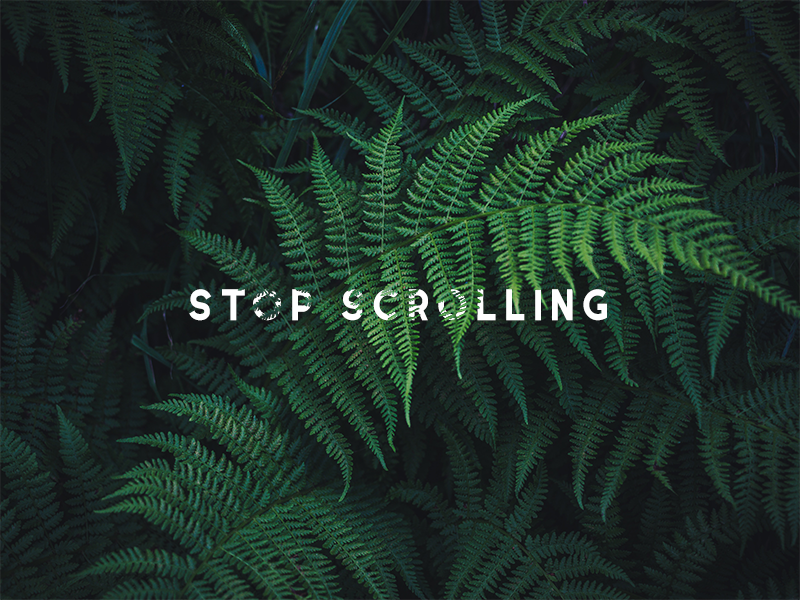 stop scrolling serif photo nature photoshop typography text fern