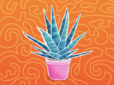 Haworthia - the succulent. ornament color flower pot plant rough sketch illustration haworthia succulent