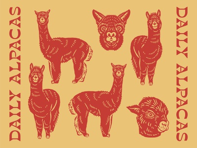 Illustration for Daily Alpacas artwork doodle alpacas design graphicdesign logo vector vintage logo vintage handrawn illustration