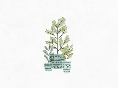 Plants in Pots illustration plant
